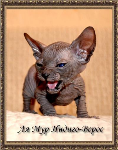 ЛяМур ИНДИГО-ВЕРОС