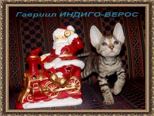 Гавриил ИНДИГО-ВЕРОС