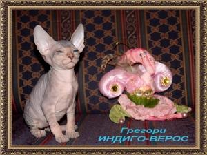 Грегори ИНДИГО-ВЕРОС